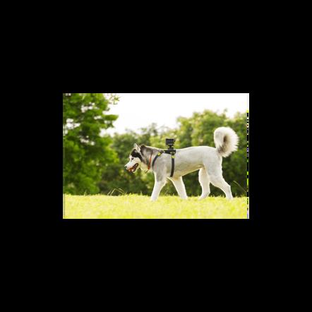 AKA-DM1 Dog Harness For Action Cam, , hi-res