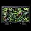 "43"" X70G LED 4K Ultra HD High Dynamic Range Smart TV"