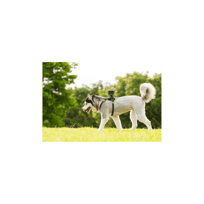 AKA-DM1 Dog Harness For Action Cam, , product-image