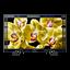 "55"" X80G LED 4K Ultra HD High Dynamic Range Smart Android TV"